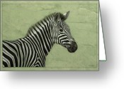 Striped Greeting Cards - Zebra Greeting Card by James W Johnson
