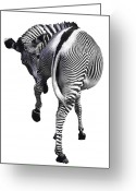 Zebra Photo Greeting Cards - Zebra Greeting Card by John Foxx