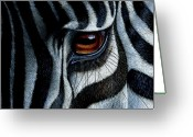 African Animals Painting Greeting Cards - Zebra Greeting Card by Jurek Zamoyski