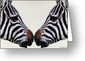Ym_art Greeting Cards - Zebra Love Greeting Card by Yvon -aka- Yanieck  Mariani