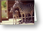Stripes Greeting Cards - Zebra Mom and Baby Greeting Card by Methune Hively