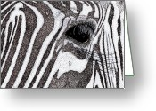 Lashes Greeting Cards - Zebra Portrait Greeting Card by Karl Addison