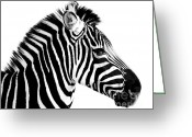 Without Greeting Cards - Zebra Greeting Card by Rebecca Margraf