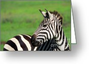 African Animals Greeting Cards - Zebra Greeting Card by Sebastian Musial