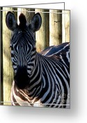 Stripe.paint Greeting Cards - Zebra with Watercolor Effect Greeting Card by Rose Santuci-Sofranko