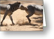 African Animals Greeting Cards - Zebras Bite Greeting Card by Paul W Sharpe Aka Wizard of Wonders