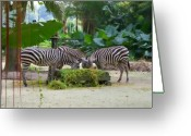 Feeding Mixed Media Greeting Cards - Zebras Greeting Card by Louise Fahy