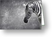 Zebra Photo Greeting Cards - Zeeeeeeebra Greeting Card by Rebecca Cozart