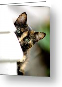 Calico Cat Greeting Cards - Zelda Greeting Card by Emily Stauring