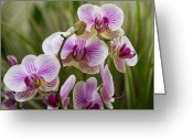 Exotic Orchid Greeting Cards - Zen Garden Greeting Card by Angelina Vick