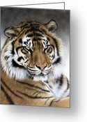Airbrush Greeting Cards - Zen Greeting Card by Sandi Baker
