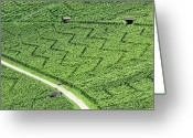 Dirt Road Greeting Cards - Zig-zag In Vineyards Greeting Card by Ursula Sander