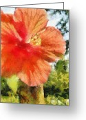 Oklahoma Greeting Cards - Zoo Flower Greeting Card by Jeff Kolker