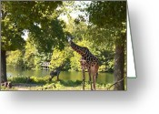 Kansas City Greeting Cards - Zoo Landscape Greeting Card by Steve Karol