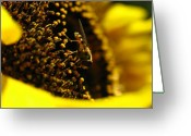 Bumble Greeting Cards - Honey Bee Greeting Card by Juergen Roth