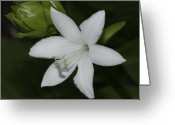 White And Green Greeting Cards - Hosta flower Greeting Card by Deepak Kumar