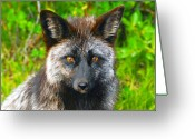 Sly Greeting Cards - Hungry Eyes Greeting Card by David Lee Thompson