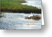 Egret Digital Art Greeting Cards - In Flight Greeting Card by Suzanne Gaff