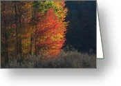 Indiana Autumn Greeting Cards - Indiana Colors Greeting Card by Michael L Kimble