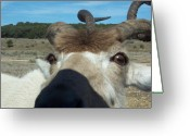 Horns Greeting Cards - Introduction Greeting Card by Jennifer  Diaz