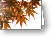 Red Leaves Greeting Cards - Japanese Maple Greeting Card by Panos Trivoulides