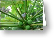Papaya Greeting Cards - Java Sparrows Greeting Card by Don Lindemann