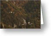 Superhornet Greeting Cards - Landing Greeting Card by Angel  Tarantella