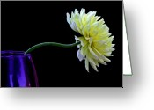 Dahlia Greeting Cards - Leaning Greeting Card by Rebecca Cozart