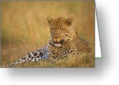 Kenya Greeting Cards - Leopard Greeting Card by Johan Elzenga