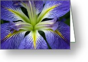 Vari Buendia Greeting Cards - Lilied Greeting Card by Vari Buendia
