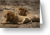 Waterhole Greeting Cards - Lion brothers Greeting Card by Joseph G Holland