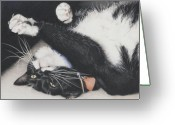 Tuxedo Greeting Cards - Lizzie - Cant Resist The Cuteness Greeting Card by Amy S Turner