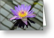 Vari Buendia Greeting Cards - Lotus Greeting Card by Vari Buendia