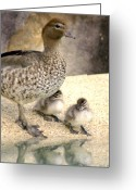 Twins Greeting Cards - Mother of Twins Greeting Card by Holly Kempe