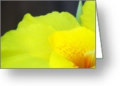 Canna Greeting Cards - Oh Canna you See Greeting Card by Diane  Boatright