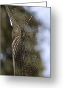Bruster Greeting Cards - Oh What Webs We Weave Greeting Card by Clayton Bruster