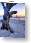Folly Beach Lighthouse Greeting Cards - Old Tree and Morris Island Lighthouse Sunrise Greeting Card by Dustin K Ryan