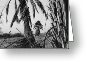 Landscape Photograpy Greeting Cards - Palm in View BW Horizontal Greeting Card by Heather Kirk