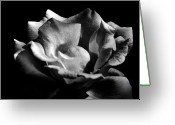 Bruster Greeting Cards - Penetrating The Rose Greeting Card by Clayton Bruster