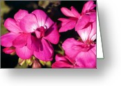Clayton Greeting Cards - Pink Spring Florals Greeting Card by Clayton Bruster