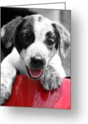 Puppies Greeting Cards - Playing Greeting Card by Amanda Barcon