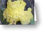 Slime Greeting Cards - Polymyxa Slime Mold Greeting Card by Kenneth Albin