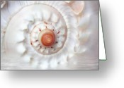 Shells Greeting Cards - Purify Greeting Card by Photodream Art