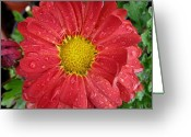 Vari Buendia Greeting Cards - Reddish Greeting Card by Vari Buendia