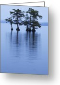Reelfoot Lake Greeting Cards - Reelfoot Reflections Greeting Card by Eric Foltz