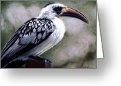 Family Pastels Greeting Cards - Regal Hornbill Greeting Card by Carol McCarty