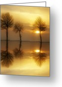 Trees Greeting Cards - Remains of the Day Greeting Card by Photodream Art