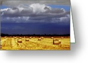 Bales Greeting Cards - Rolling On Greeting Card by Holly Kempe