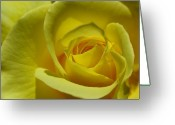 Color Greeting Cards - Rose Macro Greeting Card by Juergen Roth