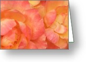 Rose Greeting Cards - Roses of Friendship Greeting Card by Deborah Brewer